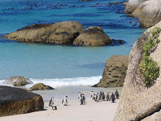 African Penguins on Boulders Beach, just on the outskirts of Simonstown | © Cape Town Hotels .co.za