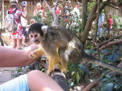 Squirrel Monkey at World of Birds in Hout Bay | © Cape Town Hotels .co.za